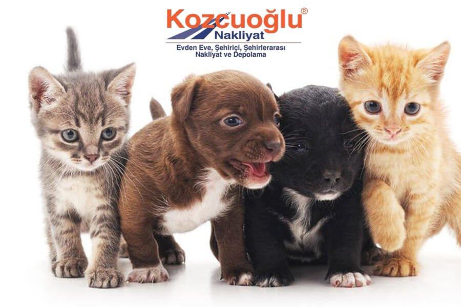 Evcil Hayvan Taşıma kedi taşıma köpek taşıma İstanbul evcil hayvan taşımacılığı firması
