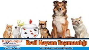 İstanbul evcil hayvan taşımacılığı İstanbul'da evcil hayvan taşıma Taksi Pet Fiyatları